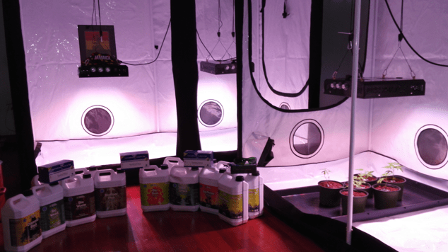 Figure 22 : Grow tent, LED light, Organic fertilizer and AlphaCAT test kit all you the ingradients unify to Grow some good High Grade Ital Ganja