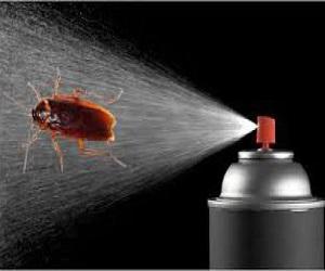 Πως θα ξεφορτωθείτε τις κατσαρίδες!
