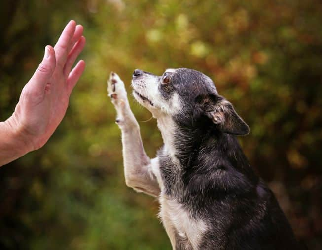 New Tricks for Owners of Old Dogs