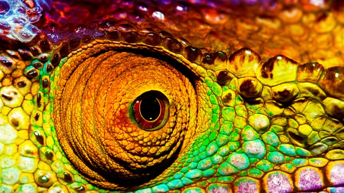 ten-science-myths-chameleon-closeup