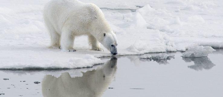 climate_change_polar_bear