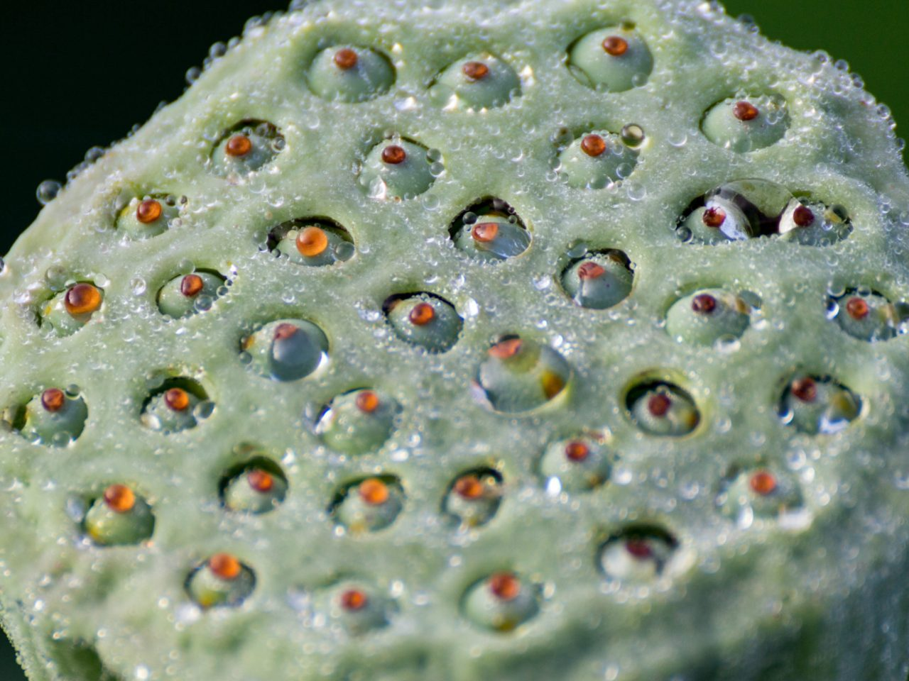 What Is Trypophobia And Why On Earth Are People So Scared Of Holes