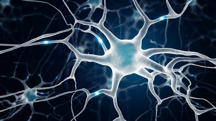 neurons_in_the_brain
