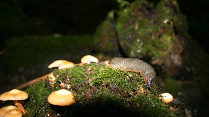 slug_eating_trackers_agriculture