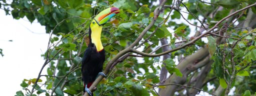 costa_rica_biodiversity_ecosystem_