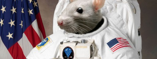 nasa_spacex_mouse_astronaut