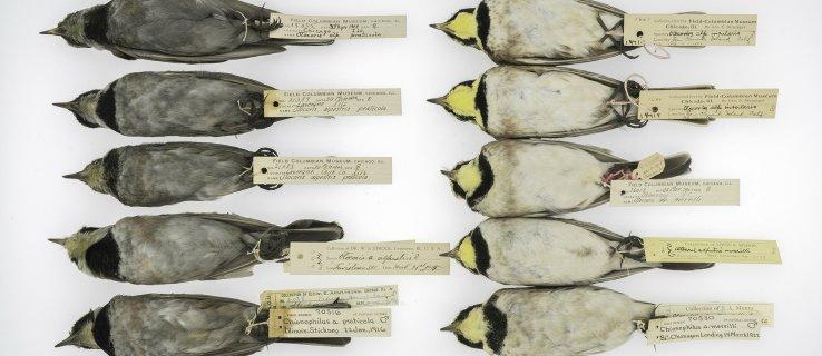 sooty_birds