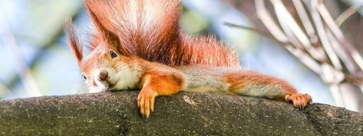 squirrel_biology_may_hold_an_unlikely_fix_for_avoiding_brain_damage_in_stroke_patients_2