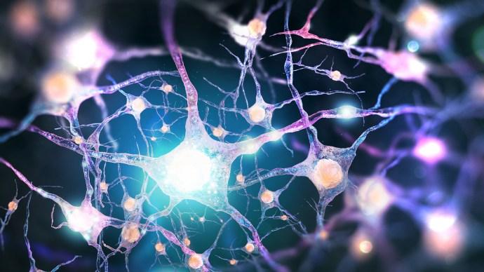 brain_neuron_chips