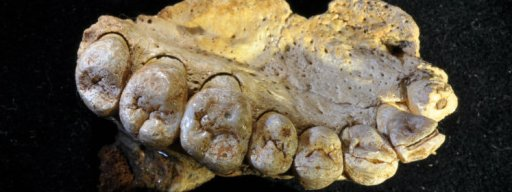 this_jawbone_fossil_proves_humans_left_africa_a_lot_earlier_than_we_thought