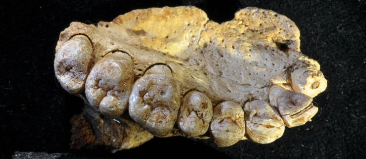 This jawbone fossil proves humans left Africa a lot earlier than we thought
