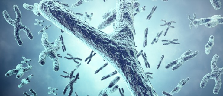 The Y chromosome is disappearing – so what will happen to men?
