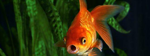 how_to_delete_your_plenty_of_fish_account