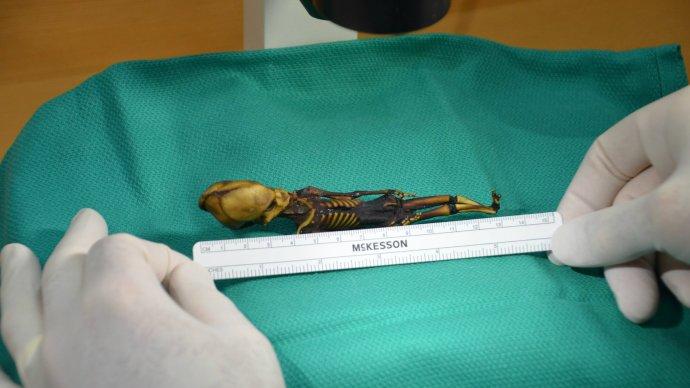 the_tragic_origins_of_ata_the_alien_mummy_finally_revealed_-_1