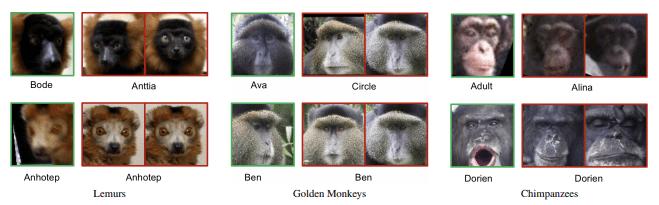 facial_recongition_for_primates
