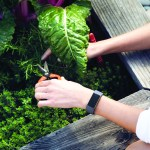 fitbit_charge_3_lifestyle_gardening_1790