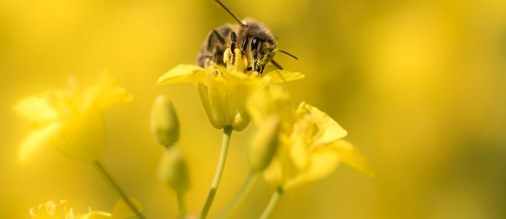 Scientists to replace drones with bees