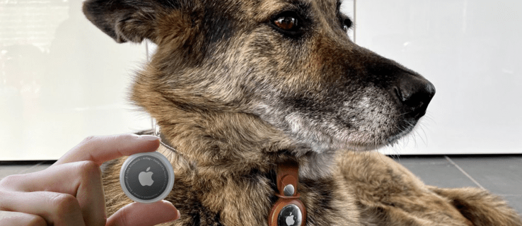 How to Use AirTags to Track Dogs or Cats