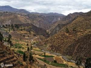 Canyon-de-colca-Voyage-Pérou-6
