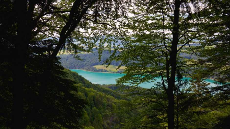On the way to Wildswimming at Filbingsee the Fuschlsee shimmers azure blue through the forest.