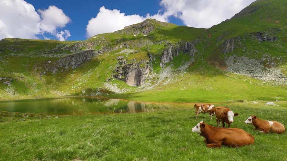 Almidylle an einem fürs Slpineswimming wie geschaffenem Bergsee - dem oberen Bockhartsee.