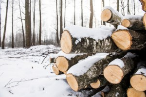 Stack of wood covered in snow during the winter