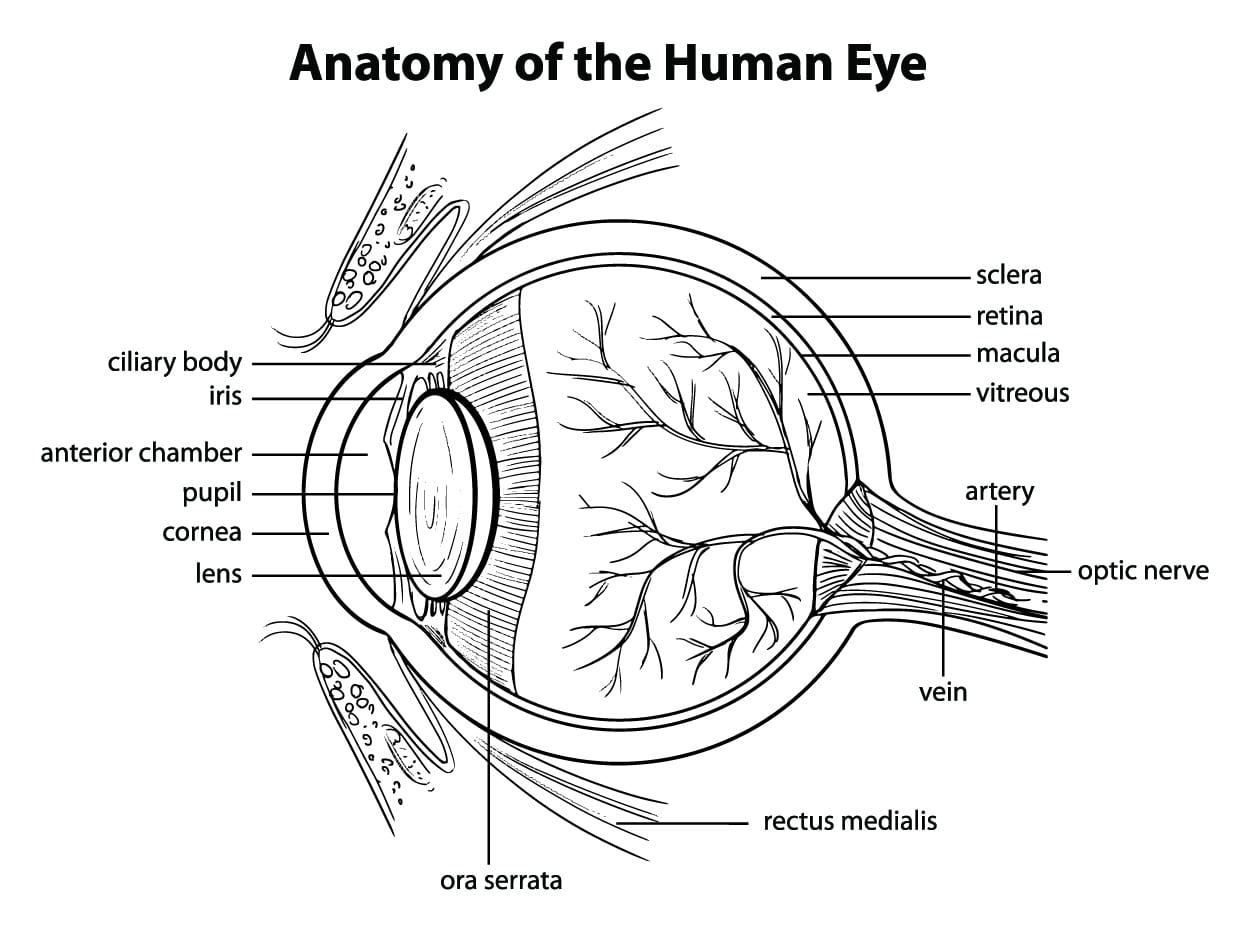A Look At How Our Eyes Work From An Ophthalmologist In