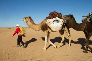 Helen-camelsMG_0291