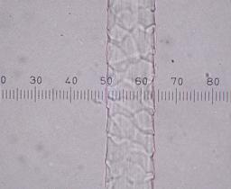 Fiber Microscopy 3