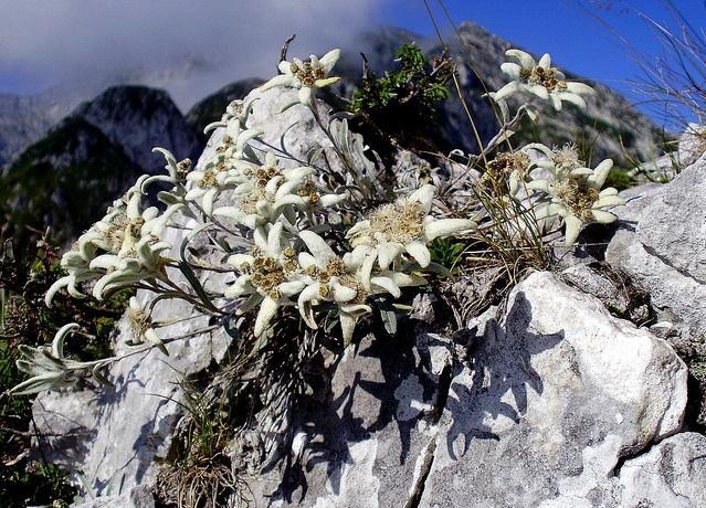 Associazione Alpini Monghidoro