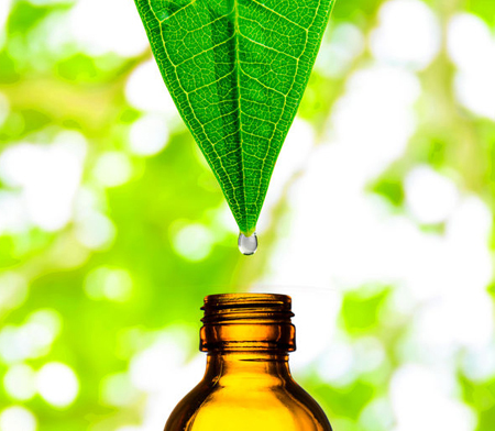 Herbal Extracts Supplier Manufacturer of Herbal Extracts