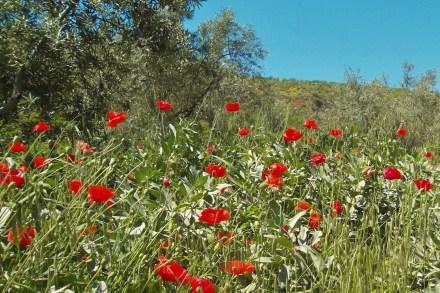 Spring in Las Alpujarras