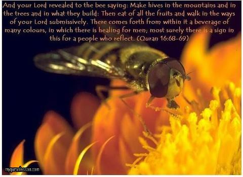 honey bee and quran, islam and honey,