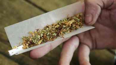 نبات شاشمندي المخدر