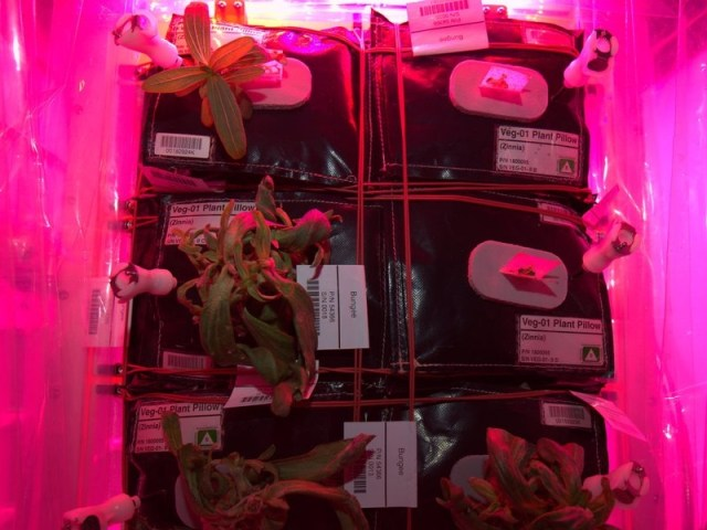 Our plants aren't looking too good. Would be a problem on Mars - 27 décembre 2015 / Source : Twitter @StationCDRKelly