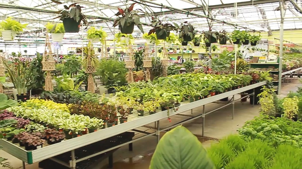 Garden Center | Alsip Home & Nursery