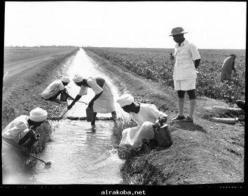 اعتقال عشرين مزارعا بالجزيرة