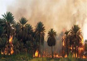 حريق الروح .. فيلم وثائقي يحكي قصة حرائق النخيل في السودان