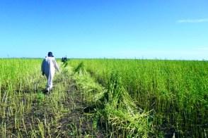 الزراعة المطرية : صيغ تمويل تركز الفقر