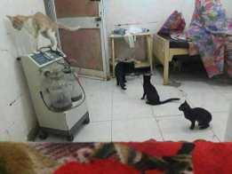"""حملة""""تصوير الواقع بمستشفيات السودان""""-فيديوهات صادمة"""