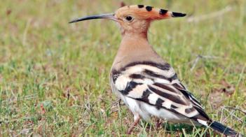 300 نوع من طيور الخريف تغادر السودان إلى موطنها الأصلي