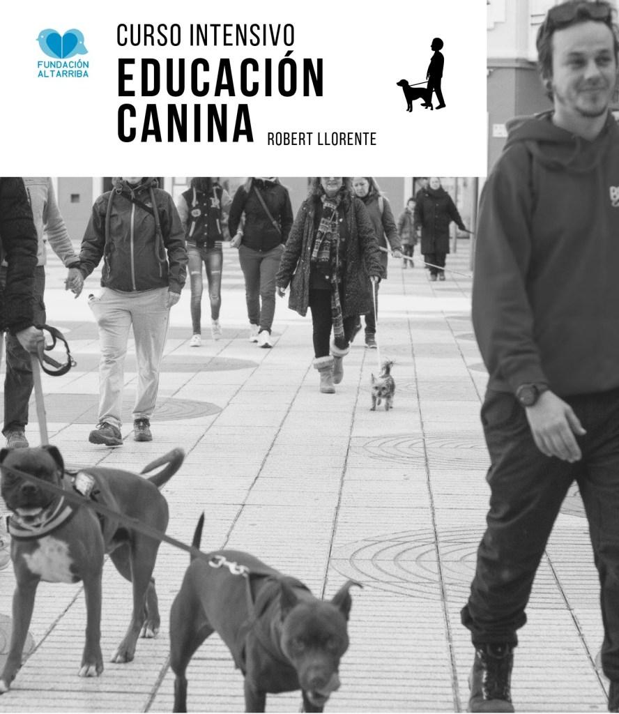 intensivo de educación canina