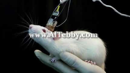 دواء drug علماء يمحون ذاكرة محددة للفئران ثم يعيدونها ثانية