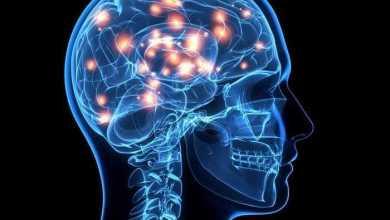 هل الدِّماغ مُنظَّم حسب وظائفه أم حسب أجزاء الجسم؟