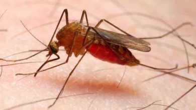 الصحة العالمية: توفير أول لقاح للملاريا العام القادم