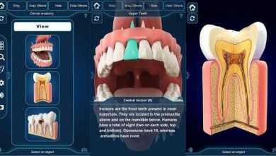 التركيب التشريحي للأسنان My Dental Anatomy