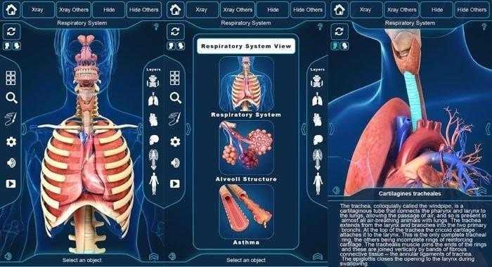برنامج التركيب التشريحي للجهاز التنفسي - My Respiratory System Anatomy