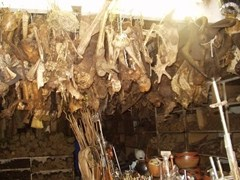 Body parts hang from a African witchdoctor shop