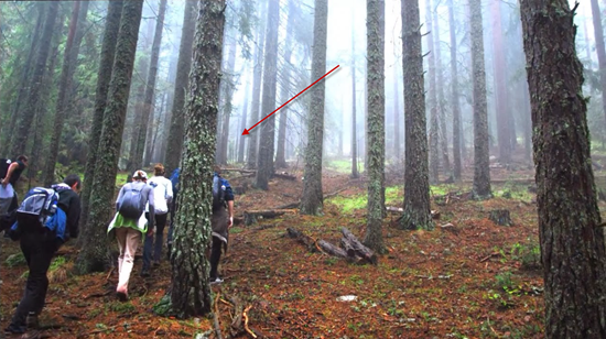 Bulgarian hikers capture photo of giant, gray humanoid-like alien deep in Yundola forest