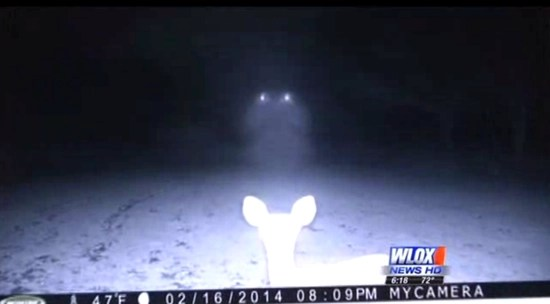 Two bright lights shine on the deer